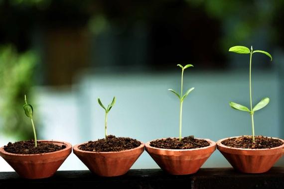 startups стартиране и разрастване на нов бизнес, маркетинг, бизнес консултации, бизнес консултанти, академия за бизнес лидери, мениджмънт